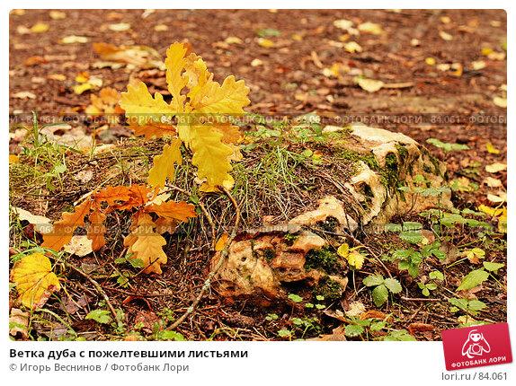 Ветка дуба с пожелтевшими листьями, фото № 84061, снято 15 сентября 2007 г. (c) Игорь Веснинов / Фотобанк Лори