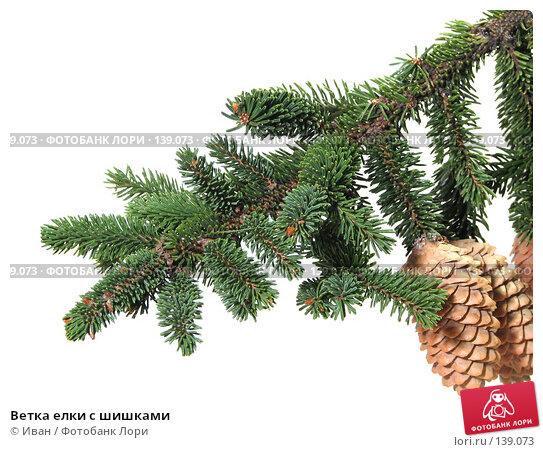 Ветка елки с шишками, фото № 139073, снято 30 октября 2007 г. (c) Иван / Фотобанк Лори