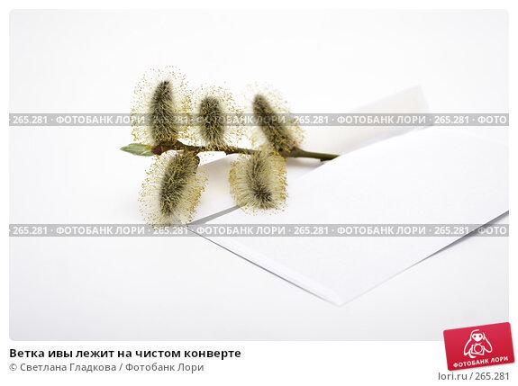 Купить «Ветка ивы лежит на чистом конверте», фото № 265281, снято 9 апреля 2008 г. (c) Cветлана Гладкова / Фотобанк Лори