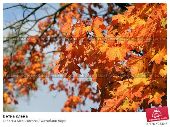 Ветка клена, фото № 93645, снято 23 сентября 2007 г. (c) Елена Мельникова / Фотобанк Лори