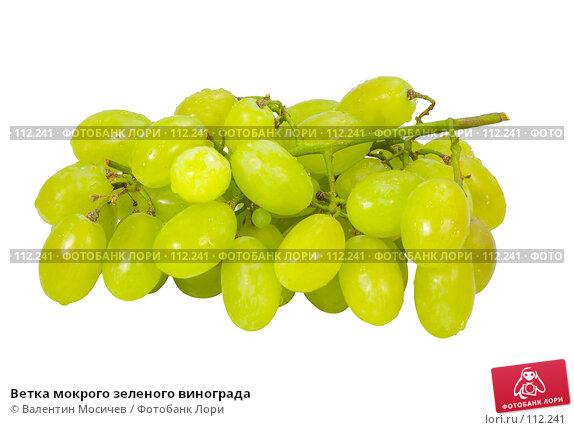 Ветка мокрого зеленого винограда, фото № 112241, снято 20 января 2007 г. (c) Валентин Мосичев / Фотобанк Лори