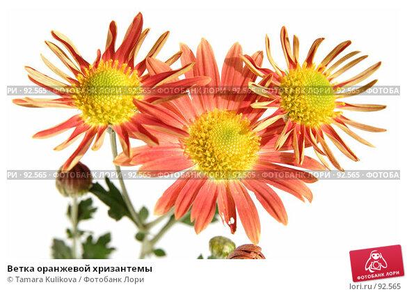 Купить «Ветка оранжевой хризантемы», фото № 92565, снято 4 октября 2007 г. (c) Tamara Kulikova / Фотобанк Лори