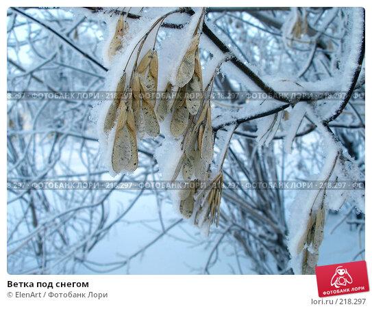 Купить «Ветка под снегом», фото № 218297, снято 20 апреля 2018 г. (c) ElenArt / Фотобанк Лори