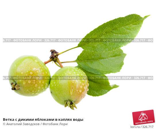 Купить «Ветка с дикими яблоками в каплях воды», фото № 326717, снято 1 июля 2007 г. (c) Анатолий Заводсков / Фотобанк Лори