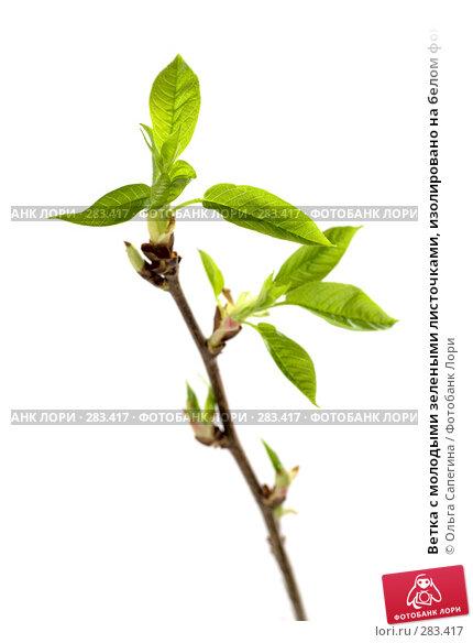 Ветка с молодыми зелеными листочками, изолировано на белом фоне, фото № 283417, снято 30 марта 2008 г. (c) Ольга Сапегина / Фотобанк Лори
