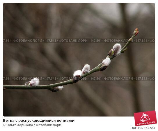 Ветка с распускающимися почками, фото № 147541, снято 23 марта 2007 г. (c) Ольга Хорькова / Фотобанк Лори