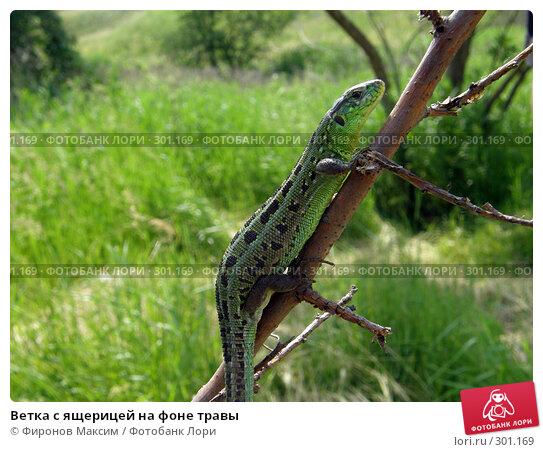 Купить «Ветка с ящерицей на фоне травы», фото № 301169, снято 25 мая 2008 г. (c) Фиронов Максим / Фотобанк Лори