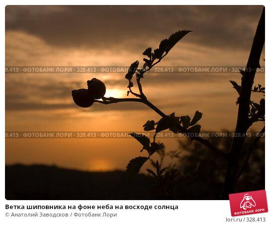 Ветка шиповника на фоне неба на восходе солнца, фото № 328413, снято 28 сентября 2005 г. (c) Анатолий Заводсков / Фотобанк Лори