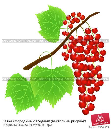 Ветка смородины с ягодами (векторный рисунок), иллюстрация № 306905 (c) Юрий Брыкайло / Фотобанк Лори