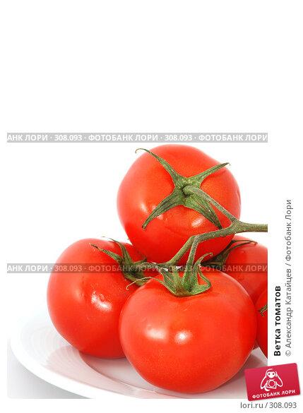 Ветка томатов, фото № 308093, снято 31 мая 2008 г. (c) Александр Катайцев / Фотобанк Лори