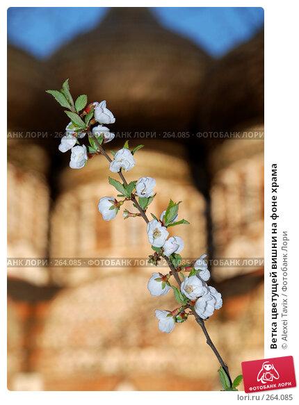Ветка цветущей вишни на фоне храма, эксклюзивное фото № 264085, снято 26 апреля 2008 г. (c) Alexei Tavix / Фотобанк Лори