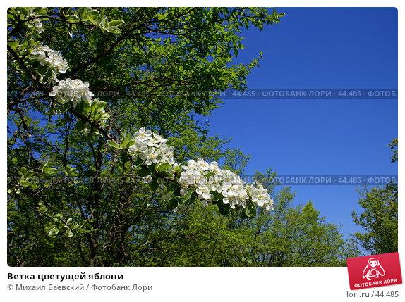 Ветка цветущей яблони, фото № 44485, снято 13 мая 2007 г. (c) Михаил Баевский / Фотобанк Лори