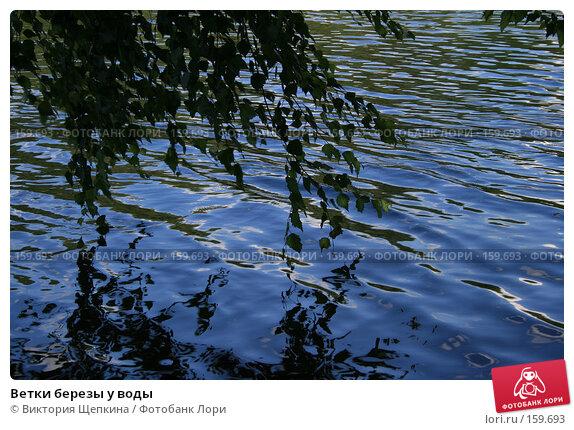 Ветки березы у воды, фото № 159693, снято 22 июня 2007 г. (c) Виктория Щепкина / Фотобанк Лори