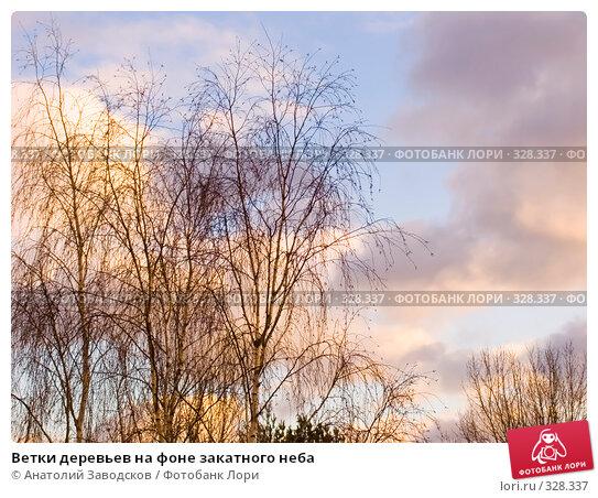 Ветки деревьев на фоне закатного неба, фото № 328337, снято 17 декабря 2006 г. (c) Анатолий Заводсков / Фотобанк Лори