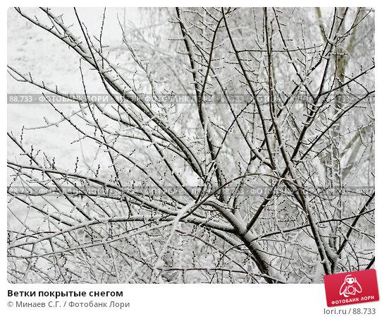 Ветки покрытые снегом, фото № 88733, снято 27 мая 2017 г. (c) Минаев С.Г. / Фотобанк Лори