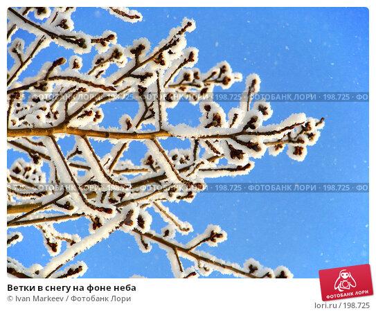 Ветки в снегу на фоне неба, фото № 198725, снято 8 декабря 2007 г. (c) Василий Каргандюм / Фотобанк Лори