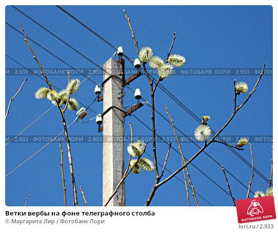 Ветки вербы на фоне телеграфного столба, фото № 2933, снято 1 мая 2006 г. (c) Маргарита Лир / Фотобанк Лори