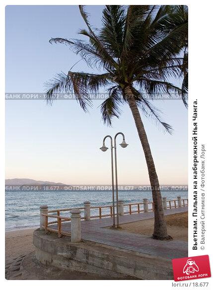 Вьетнам. Пальма на набережной Нья Чанга., фото № 18677, снято 9 февраля 2007 г. (c) Валерий Ситников / Фотобанк Лори