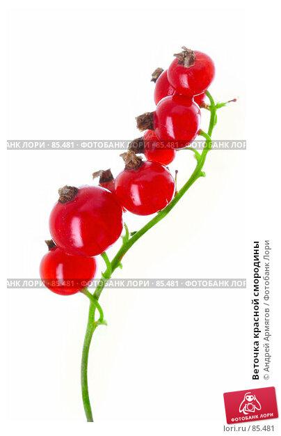 Веточка красной смородины, фото № 85481, снято 2 июля 2007 г. (c) Андрей Армягов / Фотобанк Лори