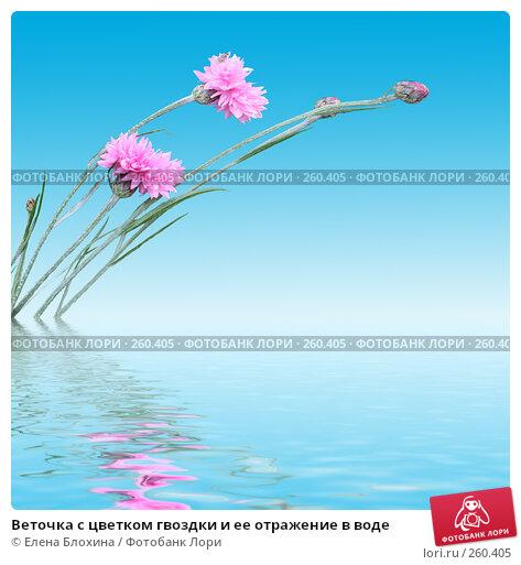 Купить «Веточка с цветком гвоздки и ее отражение в воде», фото № 260405, снято 22 марта 2018 г. (c) Елена Блохина / Фотобанк Лори