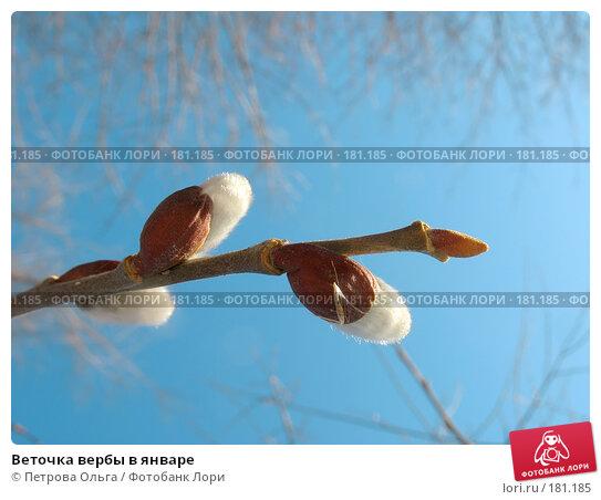 Веточка вербы в январе, фото № 181185, снято 31 декабря 2007 г. (c) Петрова Ольга / Фотобанк Лори