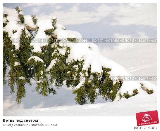 Ветвь под снегом, фото № 130017, снято 23 марта 2005 г. (c) Serg Zastavkin / Фотобанк Лори