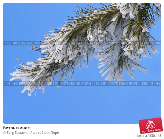 Ветвь в инее, фото № 130145, снято 25 марта 2005 г. (c) Serg Zastavkin / Фотобанк Лори