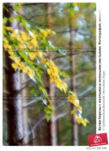 Ветви березы с желтыми и зелеными листьями. Фотография, монокль, фото № 297545, снято 20 января 2017 г. (c) Гребенников Виталий / Фотобанк Лори