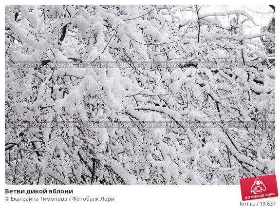 Купить «Ветви дикой яблони», фото № 19637, снято 18 декабря 2006 г. (c) Екатерина Тимонова / Фотобанк Лори