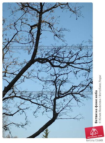 Ветви на фоне неба, фото № 3649, снято 26 апреля 2006 г. (c) Юлия Яковлева / Фотобанк Лори