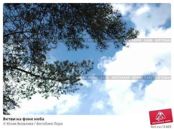 Ветви на фоне неба, фото № 3665, снято 16 мая 2006 г. (c) Юлия Яковлева / Фотобанк Лори