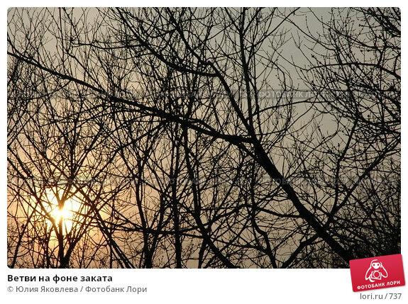 Ветви на фоне заката, фото № 737, снято 8 апреля 2005 г. (c) Юлия Яковлева / Фотобанк Лори