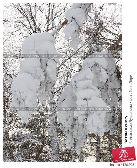 Купить «Ветви в снегу», фото № 120993, снято 5 января 2007 г. (c) Анастасия Лукьянова / Фотобанк Лори