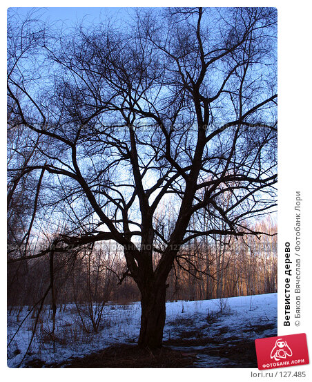 Ветвистое дерево, фото № 127485, снято 8 апреля 2007 г. (c) Бяков Вячеслав / Фотобанк Лори