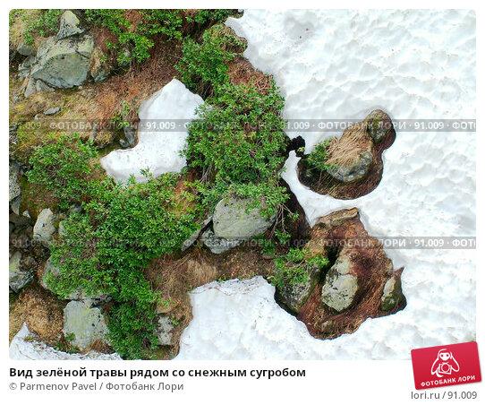 Вид зелёной травы рядом со снежным сугробом, фото № 91009, снято 1 июня 2007 г. (c) Parmenov Pavel / Фотобанк Лори