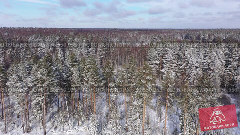 View from drone of winter forest landscape with snowy fir trees on sunny day. Стоковое видео, видеограф Яков Филимонов / Фотобанк Лори