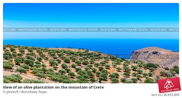 Купить «View of an olive plantation on the mountain of Crete», фото № 26815893, снято 9 июля 2017 г. (c) photoff / Фотобанк Лори