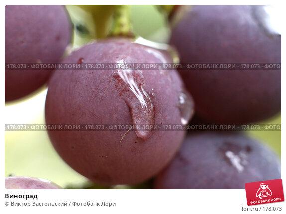 Виноград, фото № 178073, снято 14 сентября 2007 г. (c) Виктор Застольский / Фотобанк Лори