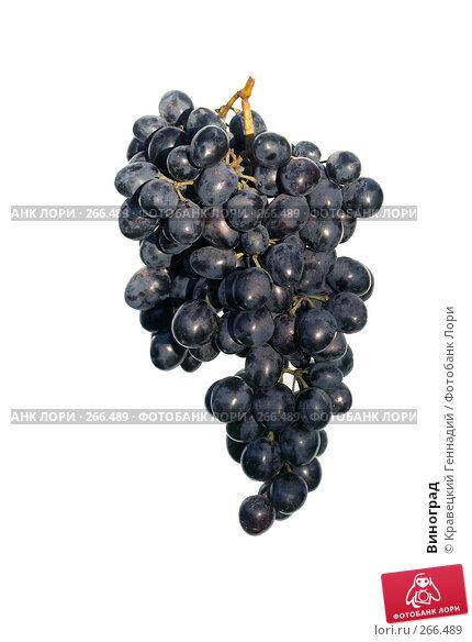 Виноград, фото № 266489, снято 12 сентября 2004 г. (c) Кравецкий Геннадий / Фотобанк Лори
