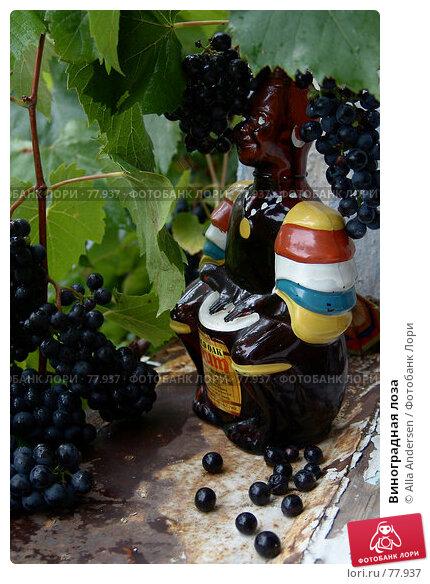 Виноградная лоза, фото № 77937, снято 2 сентября 2006 г. (c) Alla Andersen / Фотобанк Лори