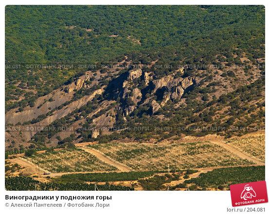 Виноградники у подножия горы, фото № 204081, снято 4 августа 2007 г. (c) Алексей Пантелеев / Фотобанк Лори