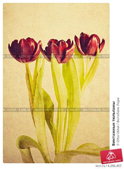 Купить «Винтажные тюльпаны», иллюстрация № 4296457 (c) Olha Ukhal / Фотобанк Лори