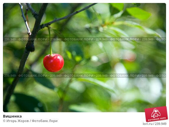 Купить «Вишенка», фото № 239949, снято 13 августа 2007 г. (c) Игорь Жоров / Фотобанк Лори