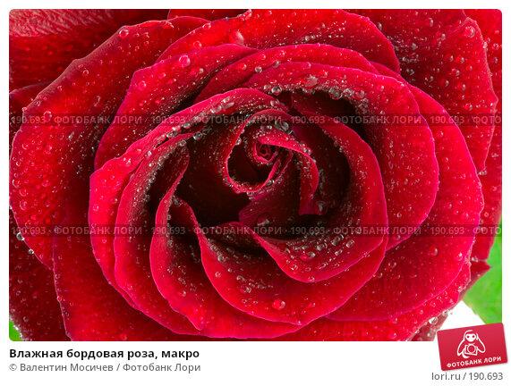 Влажная бордовая роза, макро, фото № 190693, снято 3 марта 2007 г. (c) Валентин Мосичев / Фотобанк Лори