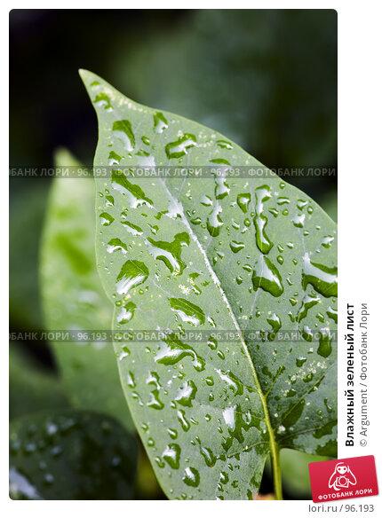 Влажный зеленый лист, фото № 96193, снято 29 июня 2007 г. (c) Argument / Фотобанк Лори