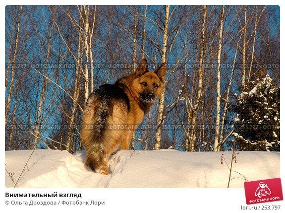 Внимательный взгляд, фото № 253797, снято 5 февраля 2005 г. (c) Ольга Дроздова / Фотобанк Лори