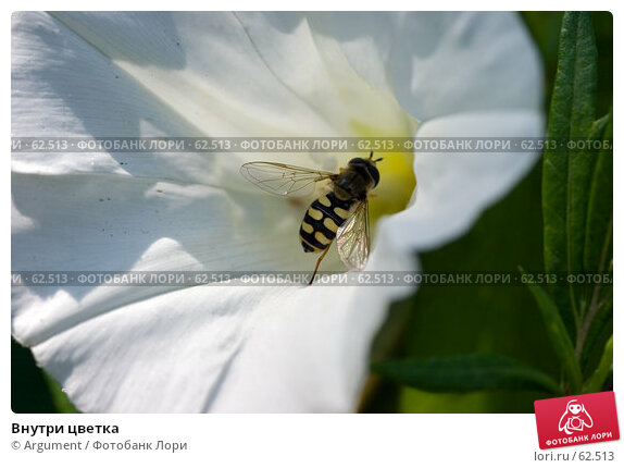 Внутри цветка, фото № 62513, снято 24 июля 2006 г. (c) Argument / Фотобанк Лори