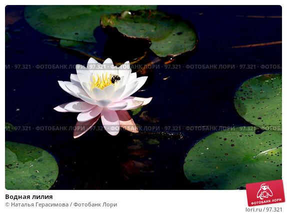 Купить «Водная лилия», фото № 97321, снято 2 сентября 2007 г. (c) Наталья Герасимова / Фотобанк Лори