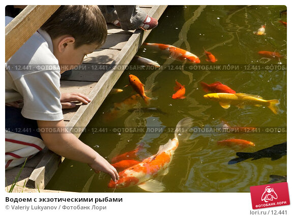 Водоем с экзотическими рыбами, фото № 12441, снято 26 мая 2006 г. (c) Valeriy Lukyanov / Фотобанк Лори