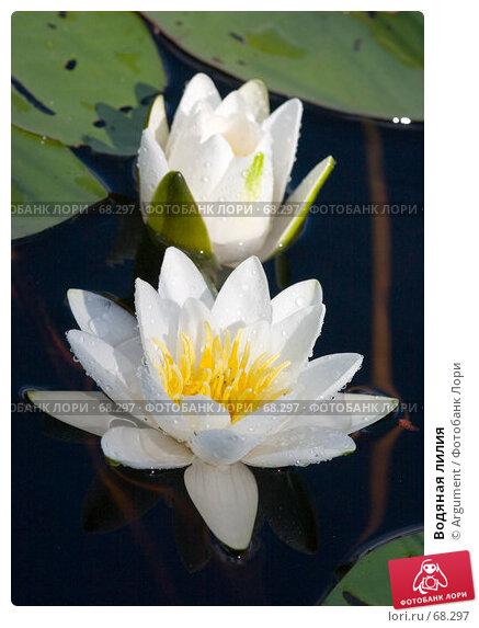 Купить «Водяная лилия», фото № 68297, снято 27 июля 2005 г. (c) Argument / Фотобанк Лори